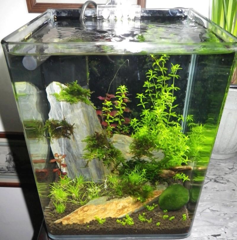 Je vais vous présenter mon aquarium DENNERLE NanoCube 10 L. Imgp0027