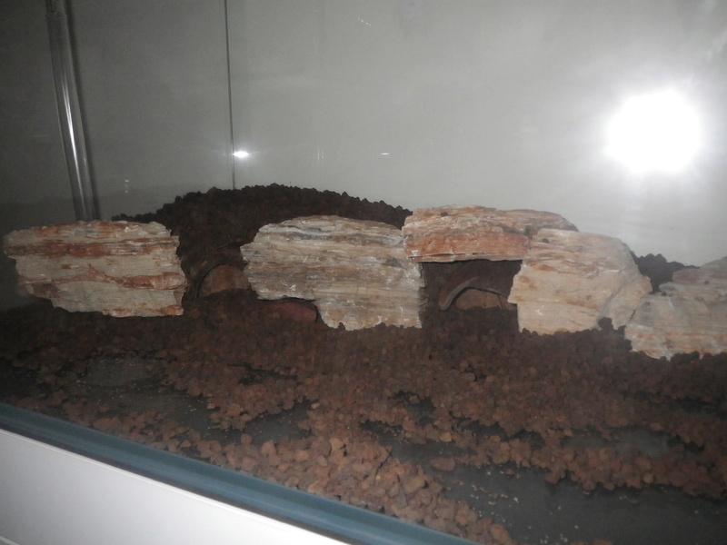 Mon nouveau projet : aquarium de 300 l.  Imgp0064