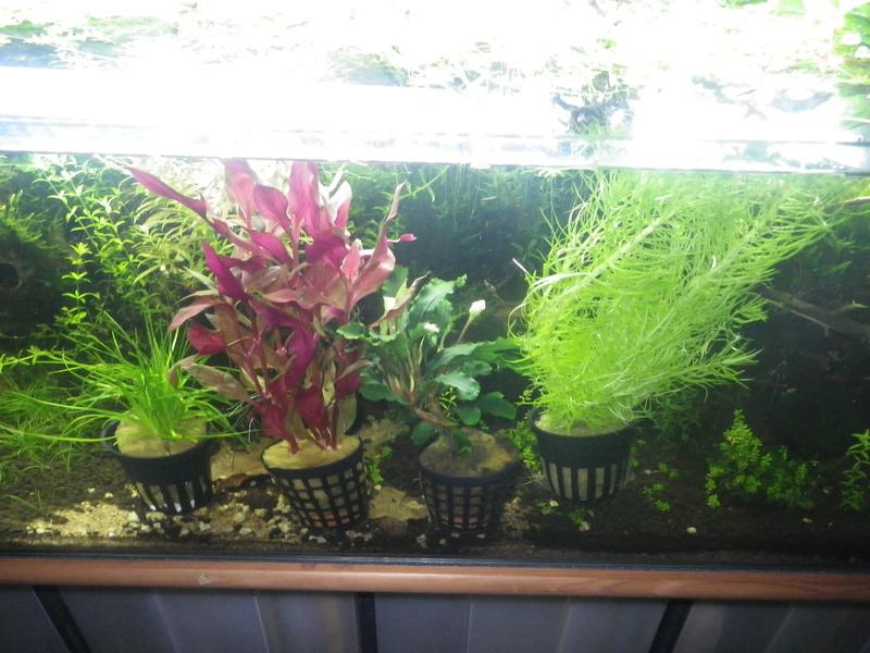 Mon nouveau projet : aquarium de 300 l.  Imgp0077