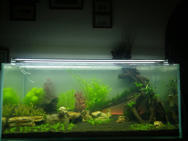 Mon nouveau projet : aquarium de 300 l.  Imgp0115