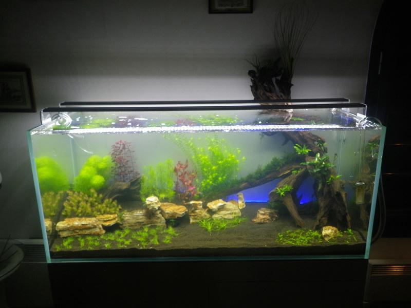 Mon nouveau projet : aquarium de 300 l.  Imgp0116