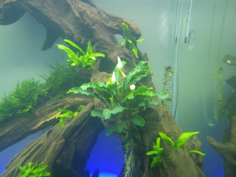 Mon nouveau projet : aquarium de 300 l.  Imgp0117