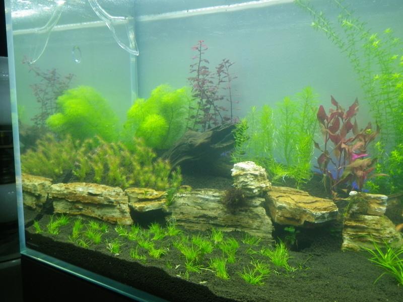 projet pour mon nouveau aquarium  Imgp0118