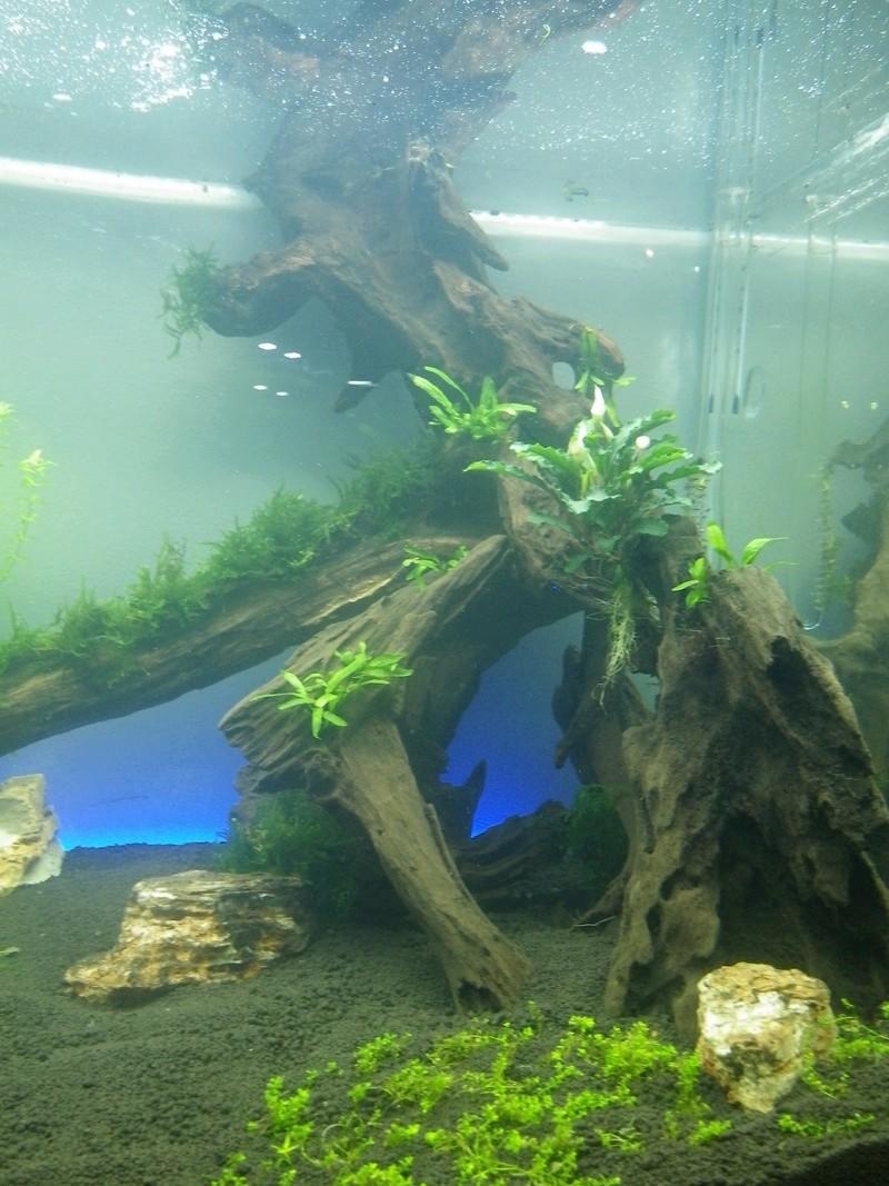 Mon nouveau projet : aquarium de 300 l.  Imgp0119