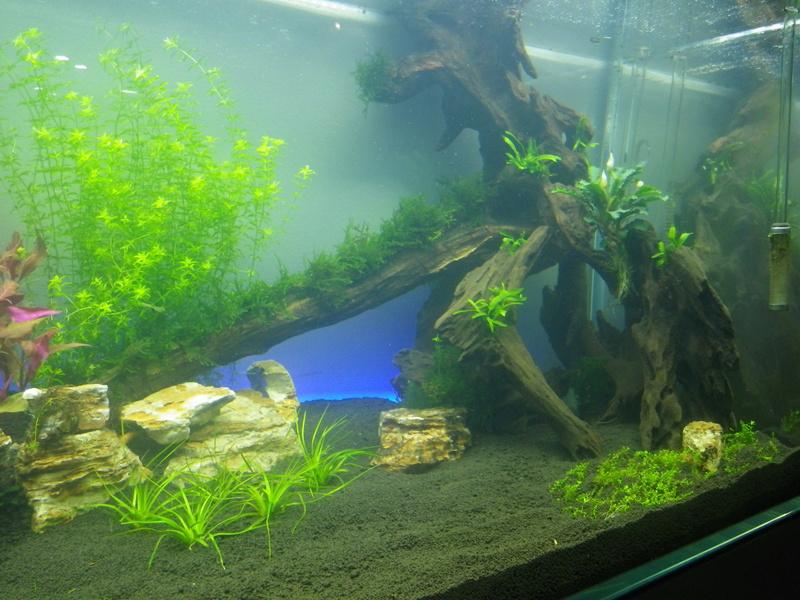 Mon nouveau projet : aquarium de 300 l.  Imgp0120