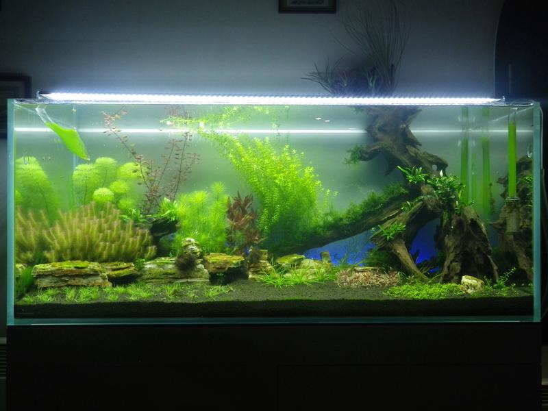 Mon aquarium Imgp0128