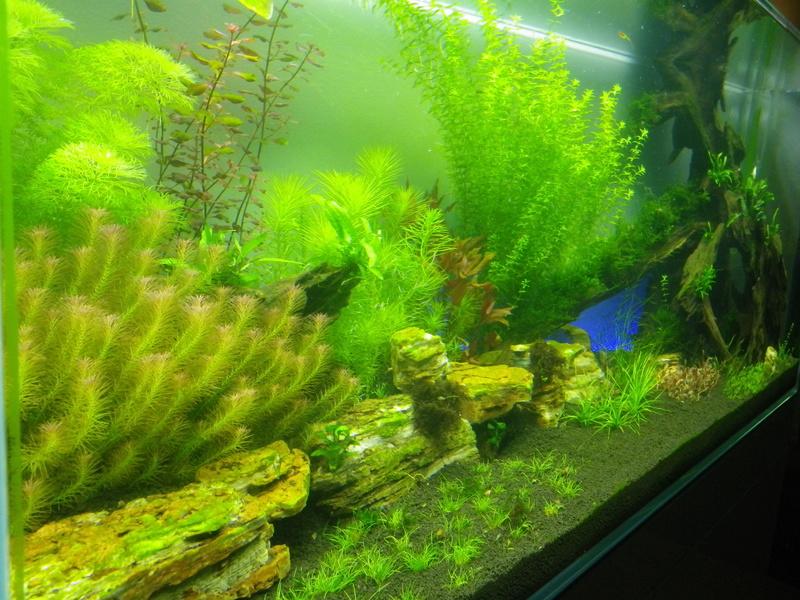Mon nouveau projet : aquarium de 300 l.  Imgp0129