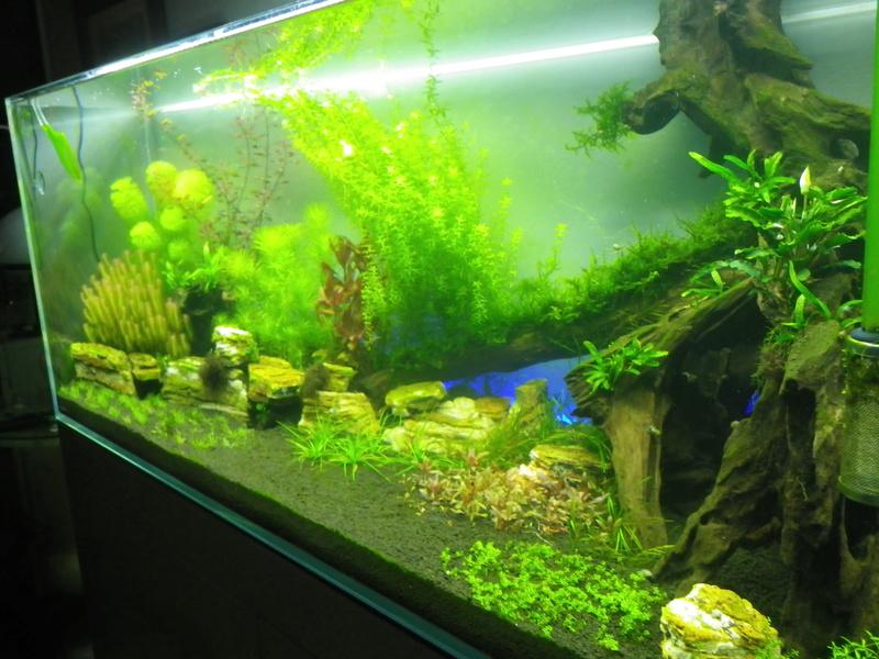 Mon nouveau projet : aquarium de 300 l.  Imgp0130