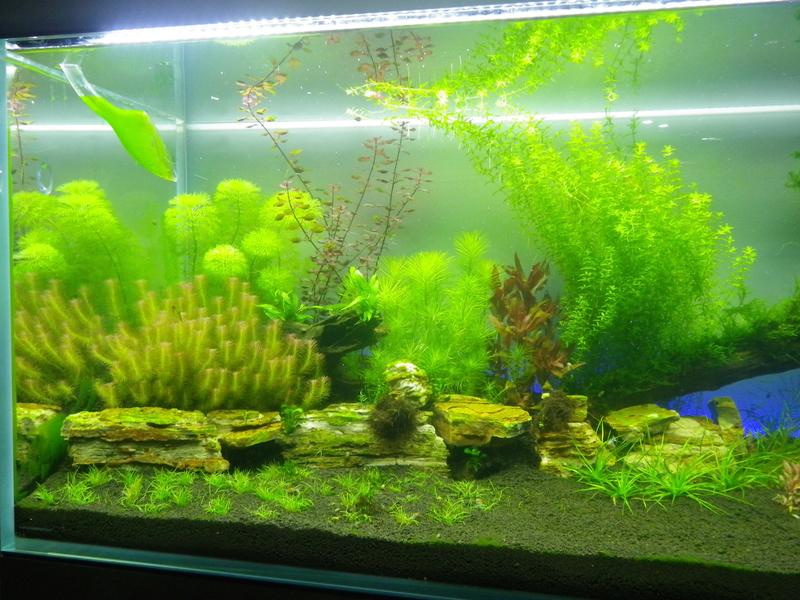 Mon nouveau projet : aquarium de 300 l.  Imgp0131