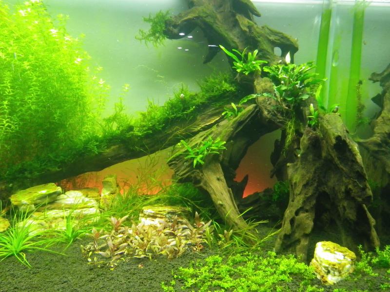 Mon nouveau projet : aquarium de 300 l.  Imgp0132