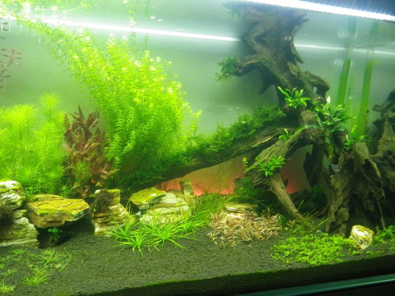 Mon nouveau projet : aquarium de 300 l.  Imgp0133