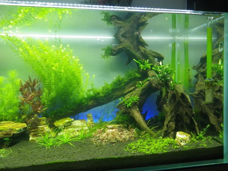 Mon nouveau projet : aquarium de 300 l.  Imgp0134