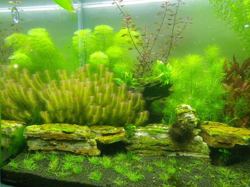 Mon nouveau projet : aquarium de 300 l.  Imgp0135