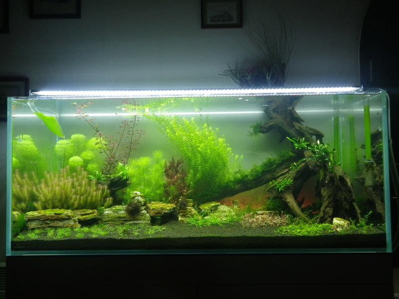 Montrez vos Aquariums Imgp0136