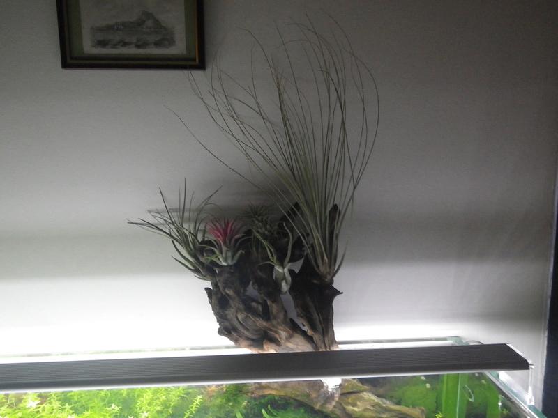 Mon nouveau projet : aquarium de 300 l.  Imgp0137