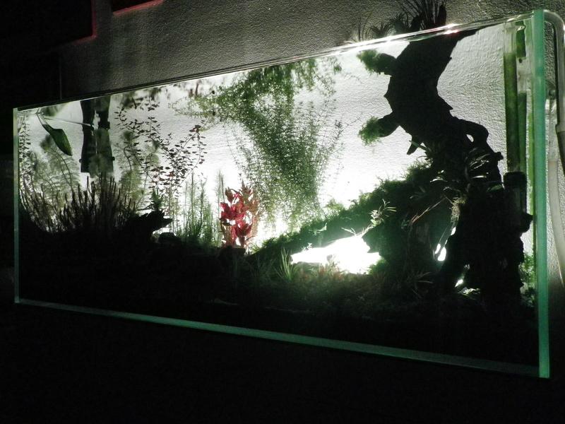 Mon nouveau projet : aquarium de 300 l.  Imgp0139