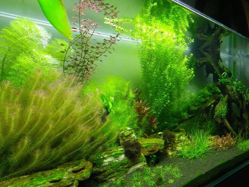 Mon nouveau projet : aquarium de 300 l.  Imgp0142