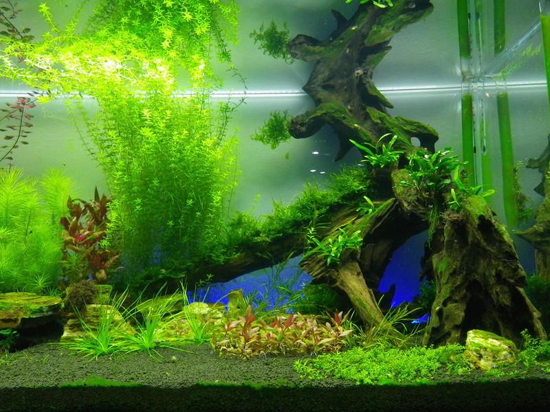 Mon nouveau projet : aquarium de 300 l.  Imgp0144