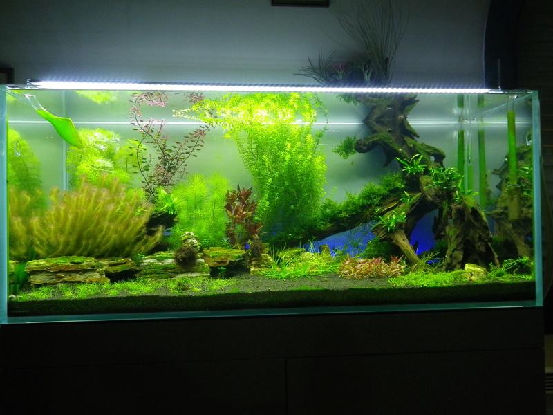 Présentation de mon aquarium - Page 2 Imgp0145