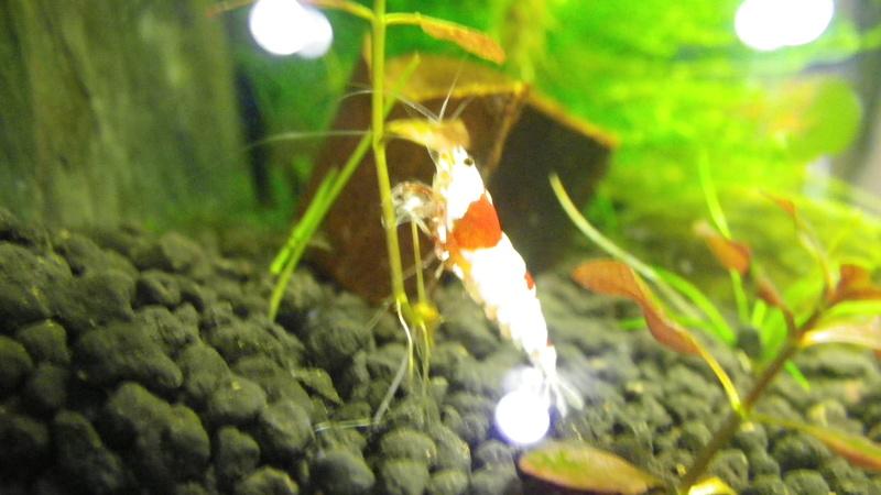 Je vais vous présenter mon aquarium DENNERLE NanoCube 10 L. Imgp0146