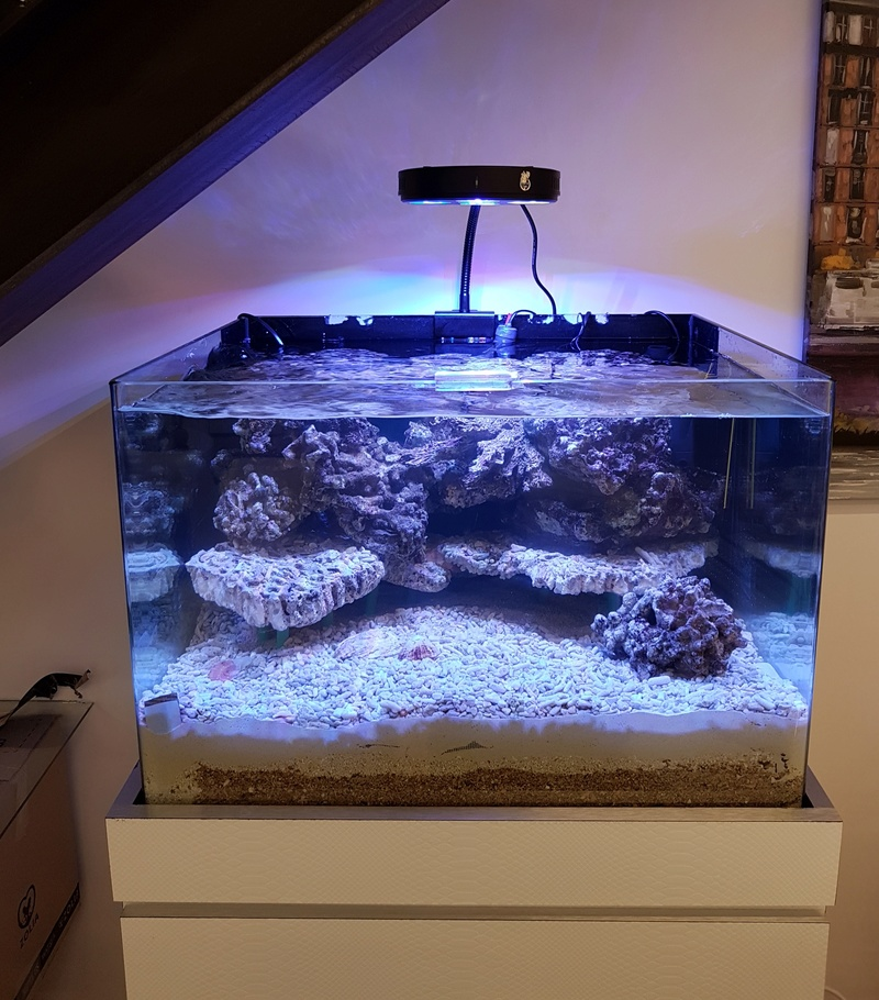 Coral Box Moon : une rampe led accessible 20161134