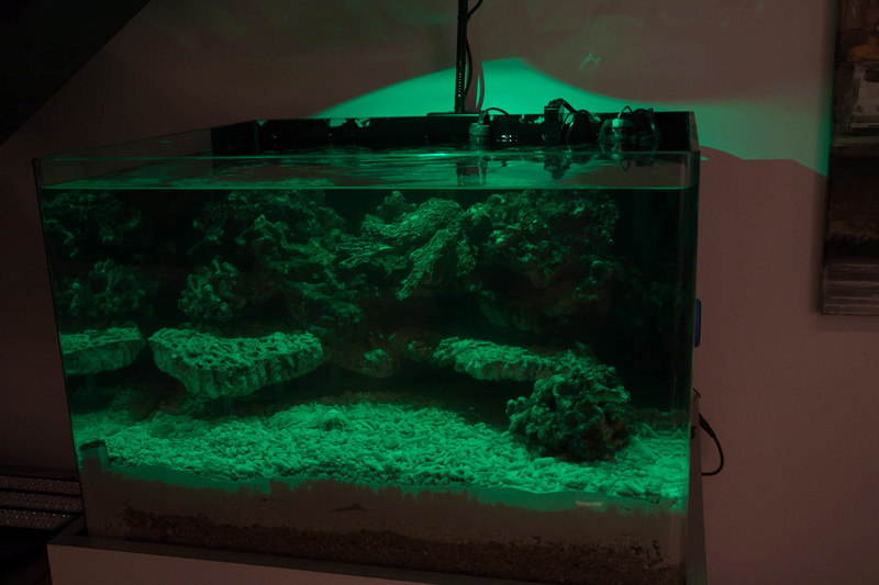 Coral Box Moon : une rampe led accessible Img_3613
