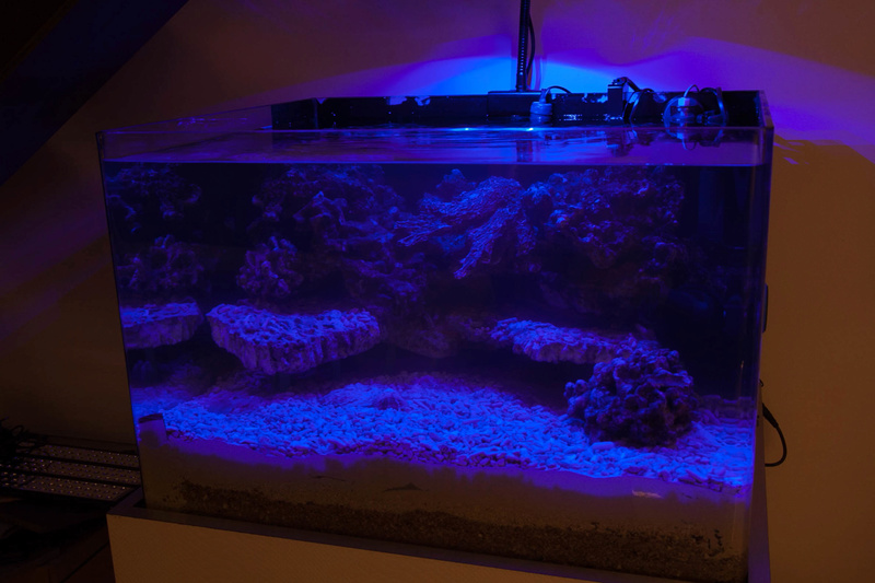 Coral Box Moon : une rampe led accessible Img_3615