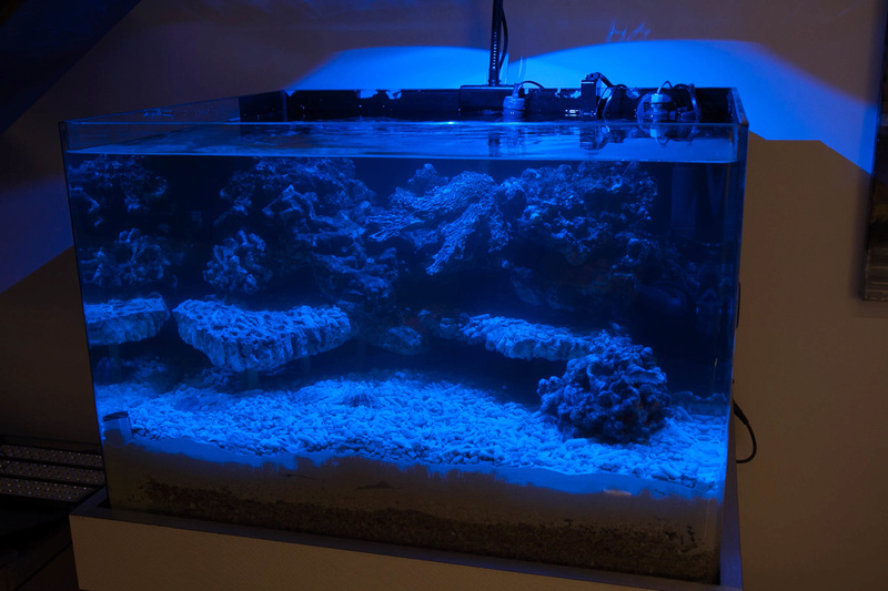 Coral Box Moon : une rampe led accessible Img_3616