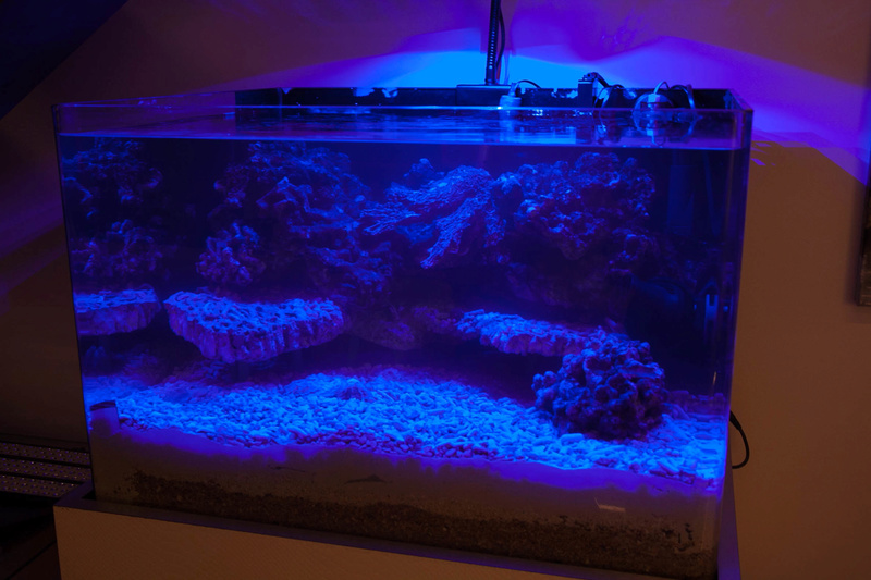 Coral Box Moon : une rampe led accessible Img_3619