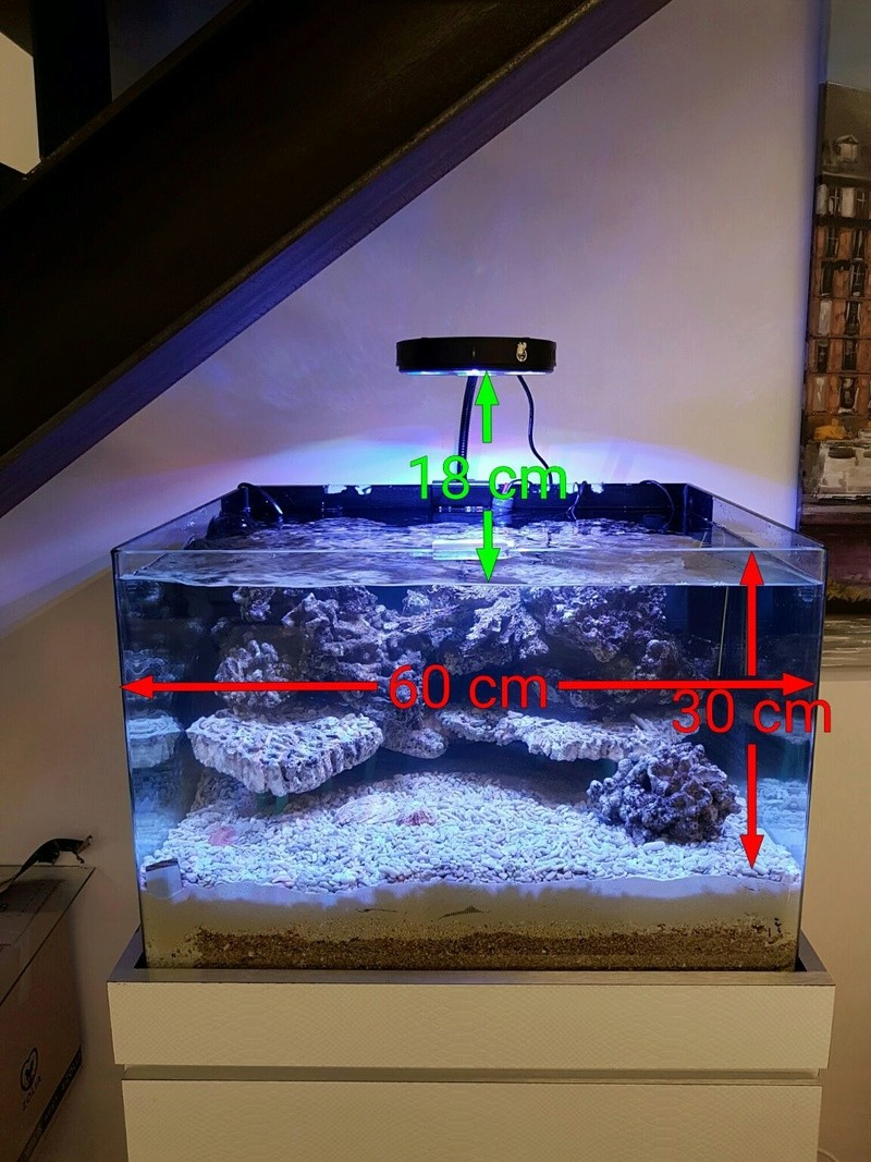 Coral Box Moon : une rampe led accessible Rycent10