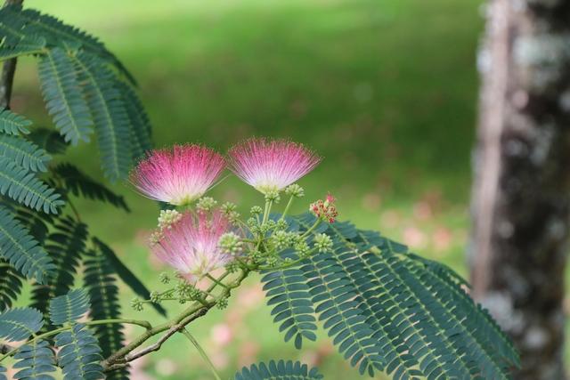 fleur de bretagne Img_1814