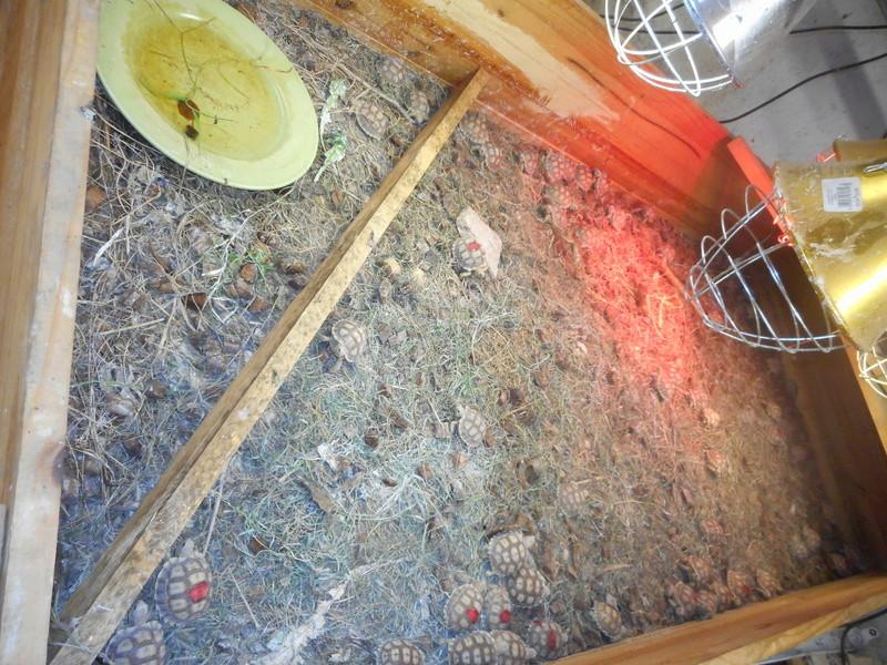 mes tortues et leur installation Dscn0414