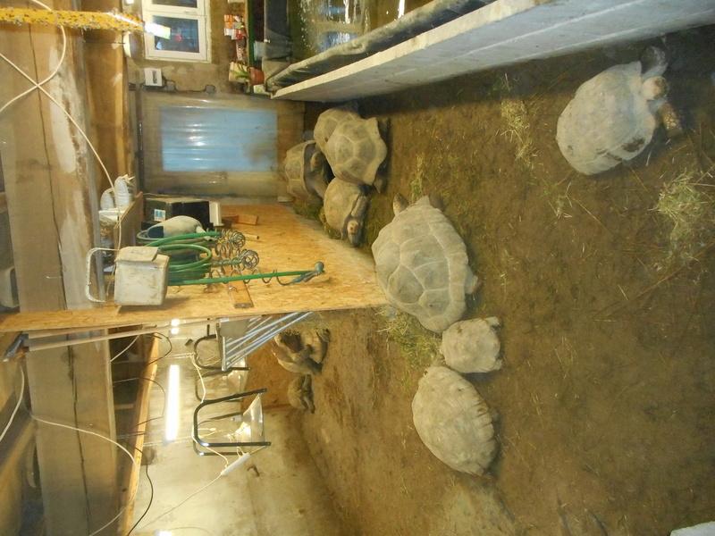 mes tortues et leur installation Dscn0415