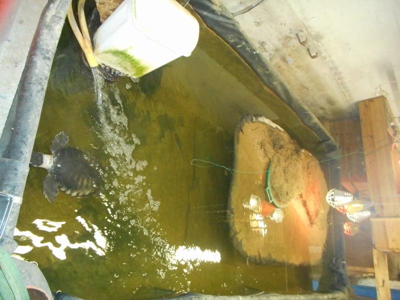 mes tortues et leur installation Dscn0416