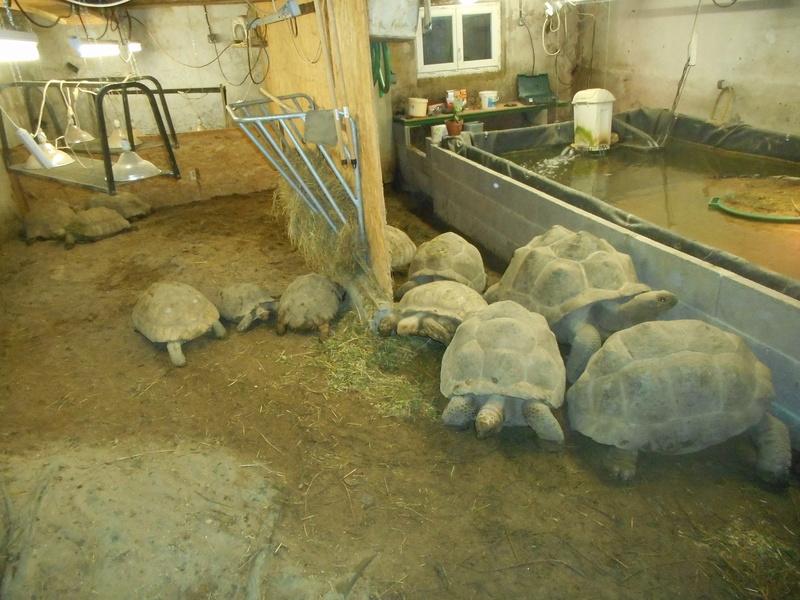 mes tortues et leur installation Dscn0417