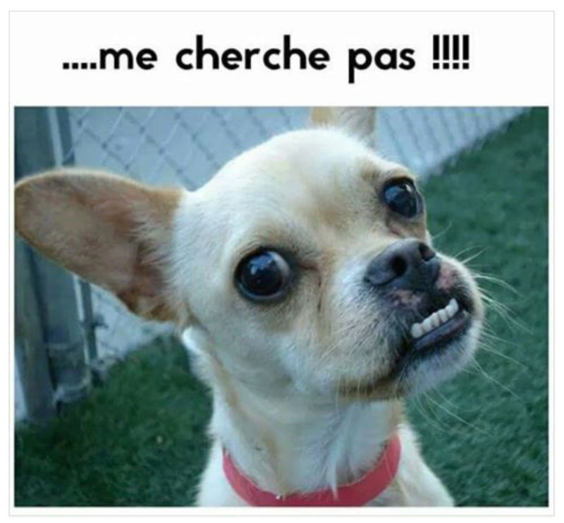 HUMOUR animal - 1 - Page 6 Chien10