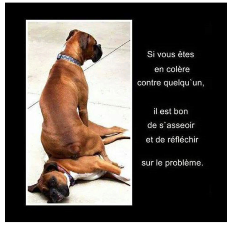 HUMOUR animal - 1 - Page 6 Chiens10