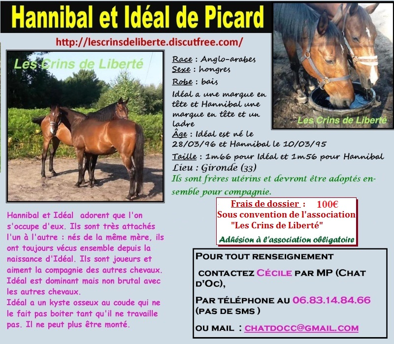 Dpt 33, 20 et 19 ans, Hannibal et Idéal, AA hongres pour RETRAITE, contact Cécile Hannib13