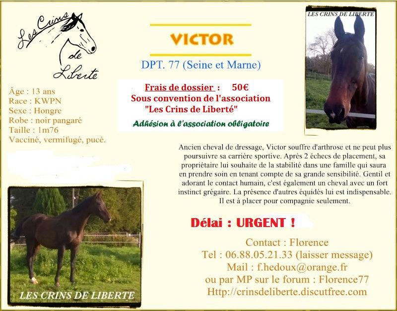 Dpt 77, 13 ans,  VICTOR KWPN adopté par Viva13 (2017) - Page 3 Victor12