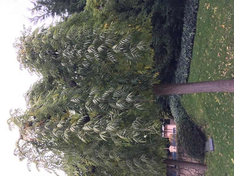 Quelle est le nom de cet arbre  Img_2912