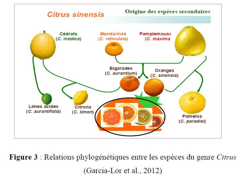 Principe de L'hybridation Origin10