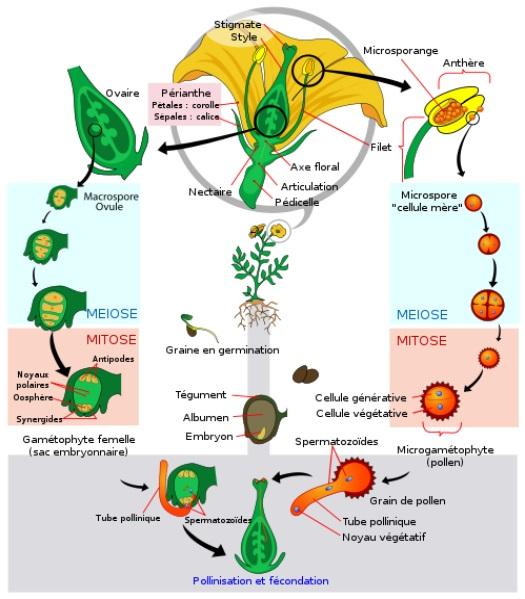 Principe de L'hybridation Pollin10
