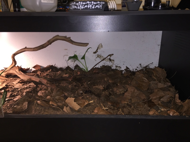 [HOW TO] Build a Large Scorpion Vivarium Fullsi17