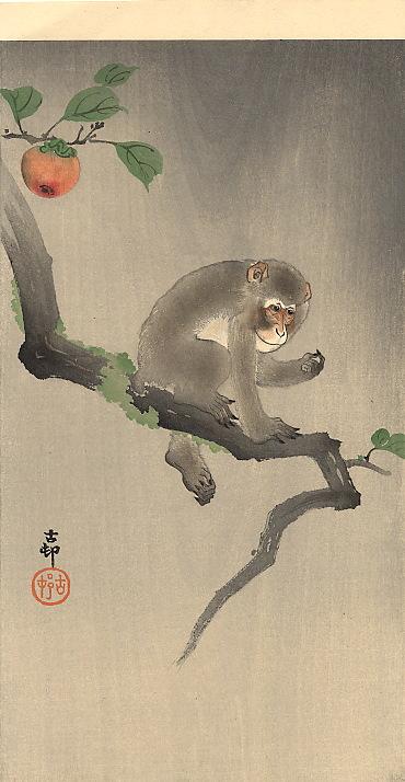 Des images en passant Monkey10