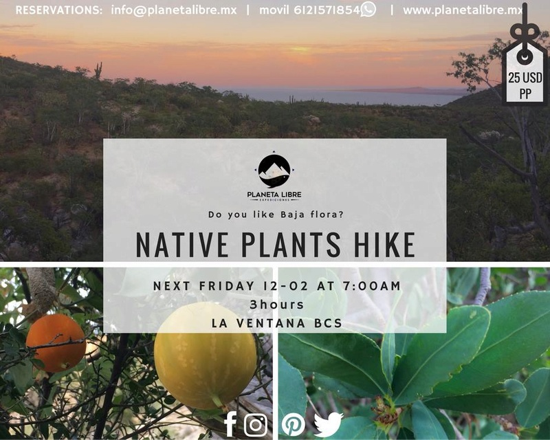 Native plants hike friday 02 december  15240010
