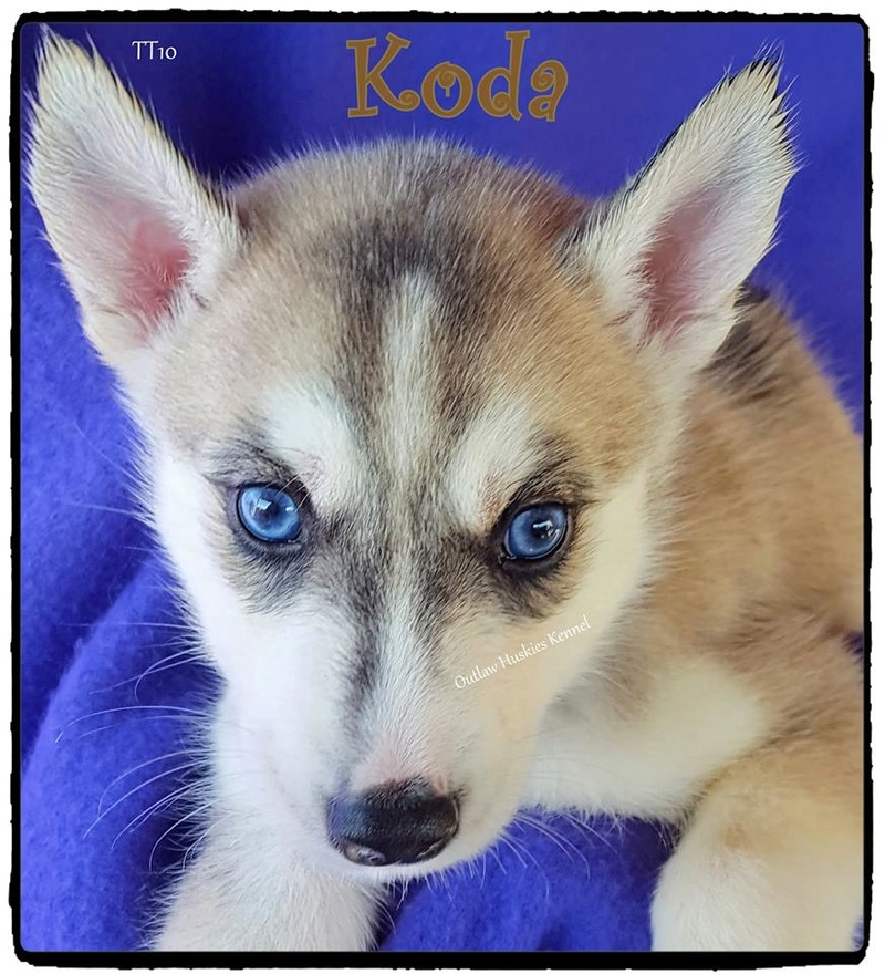 Introducing Koda Koda510