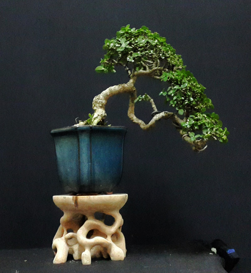 root stand with mini bonsai 1110