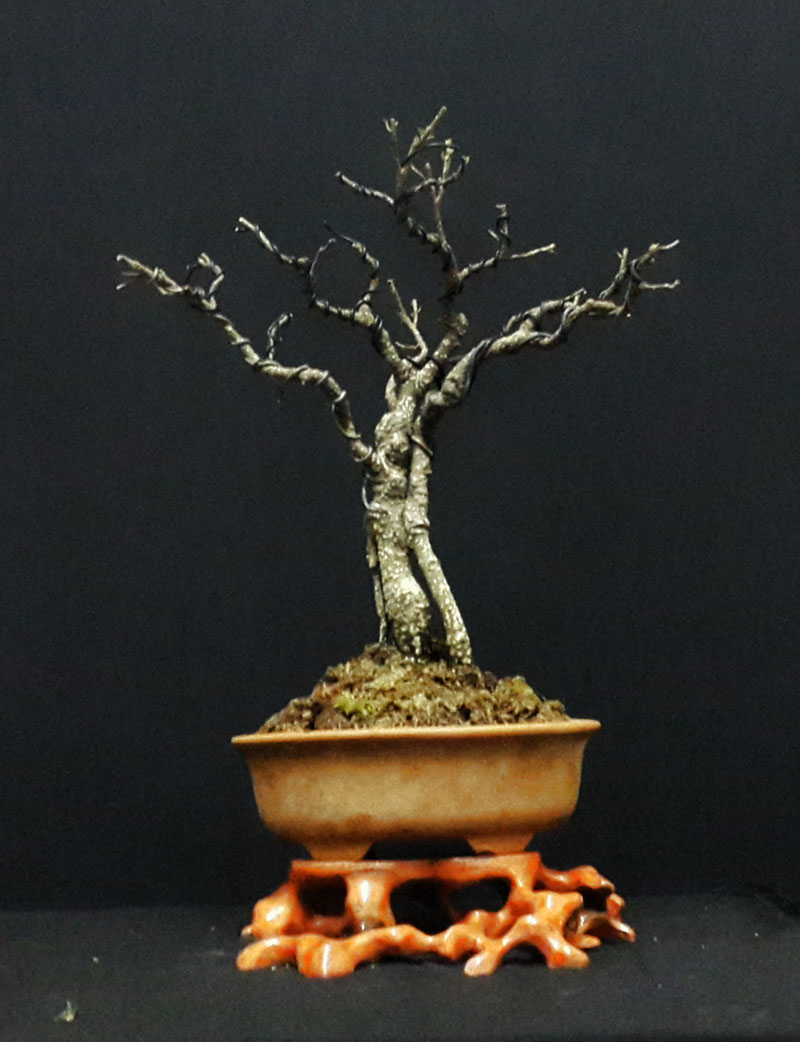root stand with mini bonsai 1210