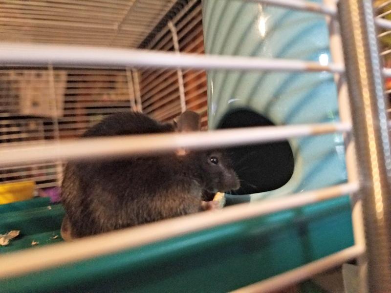 New Mouse Mom Bert_110