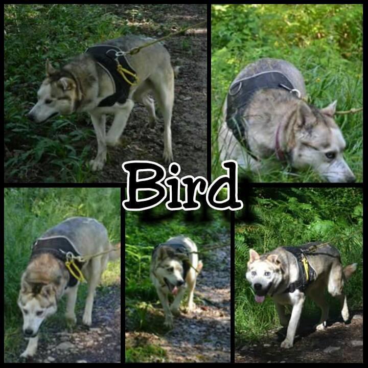 BIRD né le  25 mars 2009 15078711